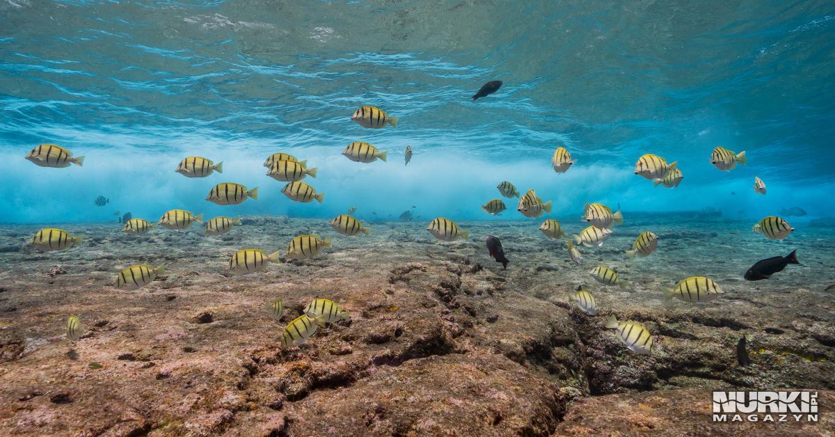 Ryby ponad ruinami Yonaguni Okinawa Japonia