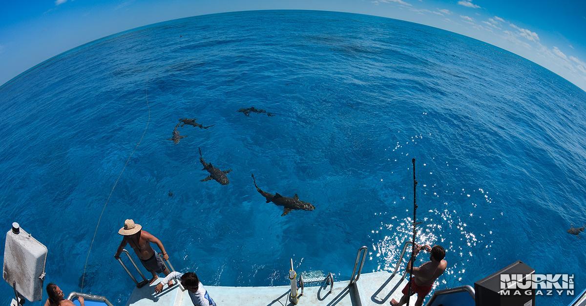 Magazyn Nurki.pl numer 3 Bahamy Rekin płetwa Nurkowanie Prenumerata Magnus Lundgren Exposure Underwater Polska