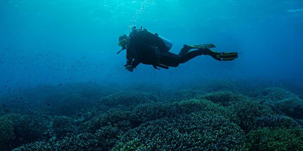 Magazyn Nurki.pl numer 2 Komodo Nurkowanie rafa koralowa nurek