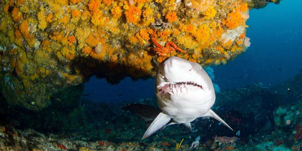 Magazyn Nurki.pl Sao Tome & Principe Wyspa Swiętego Tomasza i Książęca Afryka Rekin Nurkowanie