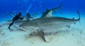 Magazyn Nurki.pl numer 3 Bahamy Rekiny Plaża Nurkowanie Prenumerata Magnus Lundgren Exposure Underwater Polska