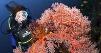Magazyn Nurki.pl numer 2 Bali Benthos Resort Gdynia Dive Nurkowanie Indonezja Nurki